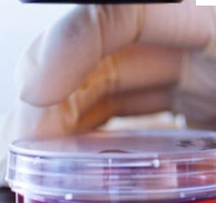 Anti UV stiklo plėvelė | Plėvelės langams - spalvotareklama.lt